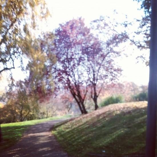 Bornheimer Hang im Herbst