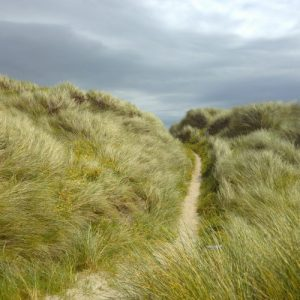 Weg durch die Dünen bei bedecktem Himmel